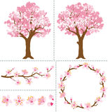 Cherry Blossoms for Design Elements Stock Image