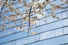 Cherry Blossoms durch modernen Wolkenkratzer Stockfotos