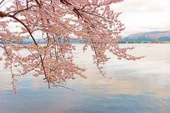 Cherry Blossoms em Shiga, Japão fotos de stock