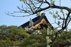 Cherry Blossoms en los argumentos del templo Foto de archivo libre de regalías