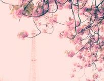 Cherry Blossoms et Tour Eiffel Photographie stock libre de droits