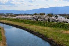 Cherry Blossoms Festival Lizenzfreie Stockbilder