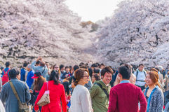Cherry Blossoms-Festival in Ueno-Park, Tokyo, Japan stockfotografie