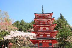 Cherry blossoms with five storied pagoda Stock Photo