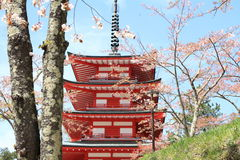 Cherry blossoms with five storied pagoda Royalty Free Stock Photography