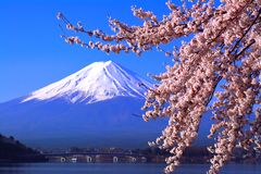 Cherry blossoms in full bloom from Lake Kawaguchi and Mt. Fuji in blue sky stock photos