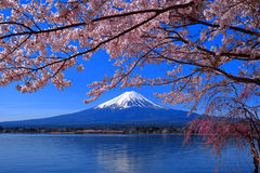 Cherry blossoms full bloom and Mt. Fuji Lake Kawaguchi Japan royalty free stock photos