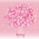 Cherry blossoms in full bloom. Pink cherry blossoms in full bloom in spring Stock Images