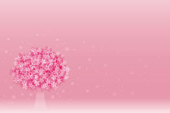 Cherry blossoms in full bloom. Pink cherry blossoms in full bloom in spring Stock Photos