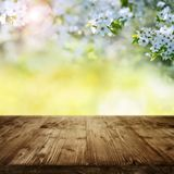 Cherry blossoms in garden with wooden table Royalty Free Stock Image