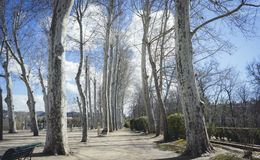 Cherry blossoms, Gardens of the city of Aranjuez, located in Spa. In. Stone palace and beautiful autumn landscapes with beautiful fountains and mythological Stock Images