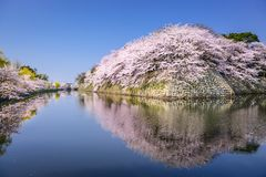 Cherry Blossoms in Hikone, Japan Stock Photo