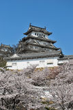 Cherry blossoms at Himeji castle Royalty Free Stock Photos