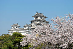 Cherry blossoms at Himeji castle Royalty Free Stock Image