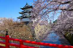 Cherry blossoms and Hirosaki Castle Royalty Free Stock Image