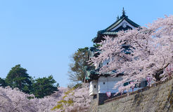 Cherry blossoms and Hirosaki Castle Stock Photo