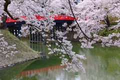 Cherry blossoms at Hirosaki Park Royalty Free Stock Images