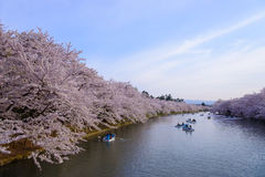 Cherry blossoms at Hirosaki Park Royalty Free Stock Photos