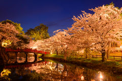 Cherry blossoms at Hirosaki Park Stock Images