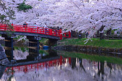 Cherry blossoms at Hirosaki Park Royalty Free Stock Photography