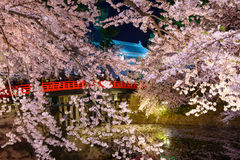 Cherry blossoms and Hirosaki Park Stock Images