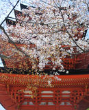 Cherry Blossoms in Hiroshima Stock Image