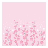 Cherry Blossoms - Horizontal Stock Photo