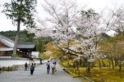 Cherry Blossoms i den Nanzenji templet, Kyoto Royaltyfria Foton