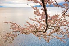 Cherry Blossoms i Shiga, Japan Arkivbild