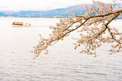 Cherry Blossoms i Shiga, Japan royaltyfri foto