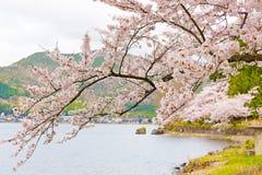 Cherry Blossoms i Shiga, Japan Arkivfoto