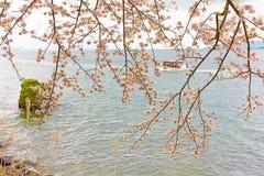 Cherry Blossoms i Shiga, Japan Fotografering för Bildbyråer