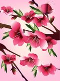Cherry blossoms illustration. Illustration of cherry blossoms on branches, on a pink background stock illustration
