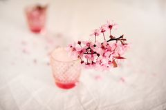 Cherry Blossoms im Rosa stockbild
