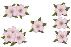 Cherry blossoms isolated groups for design. Separated groups ready for free design Royalty Free Stock Photos