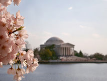Cherry Blossoms Jefferson Memorial Tidal-Bassin Stock Foto's