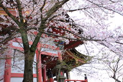 Cherry blossoms,Kiyomizudera,Japan. Royalty Free Stock Images