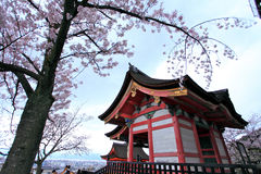Cherry blossoms,Kiyomizudera,Japan. Stock Images
