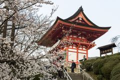 Cherry blossoms, Kyoto, Japan stock photos