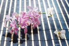 Cherry blossoms and lilac on bamboo table cloth Royalty Free Stock Photos