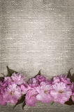 Cherry blossoms on linen background Royalty Free Stock Photography