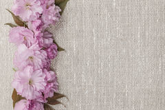 Cherry blossoms on linen background Royalty Free Stock Photo