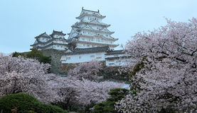 Cherry blossoms and the main tower of the UNESCO world heritage site  Stock Photo