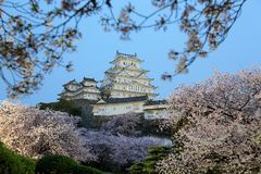Cherry blossoms and the main tower of the UNESCO world heritage site Royalty Free Stock Photo