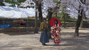 Japan cherry blossoms traditional clothes stock footage