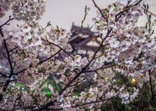 Cherry Blossoms med slotten Arkivbilder