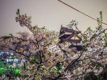 Cherry Blossoms med slotten Royaltyfri Fotografi