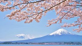 Cherry-blossoms and Mount Fuji which are viewed from Lake Kawaguchiko in Yamanashi, Japan Royalty Free Stock Image