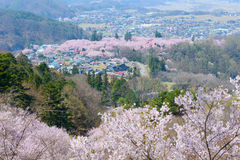 Cherry blossoms and Mountans Royalty Free Stock Photos