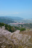 Cherry blossoms and Mountans Royalty Free Stock Image